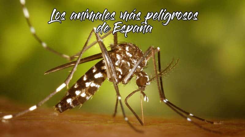 animales-mas-peligrosos-de-espana