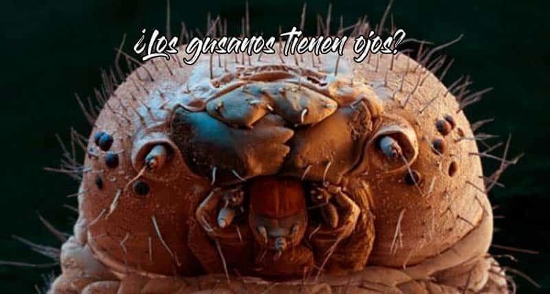 los-gusanos-tienen-ojos